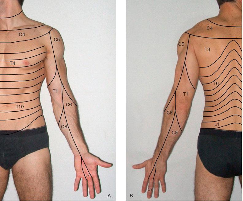Quanto para operação em aumento em um pênis em Rostov